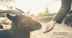 Tips-on-How-to-Start-a-Goat-Raising-Business